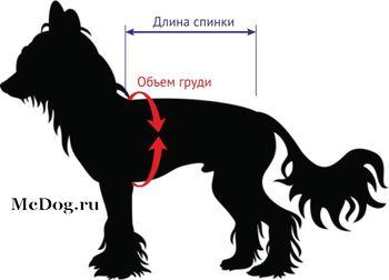 Определить размер одежды для китайских хохлатых собак