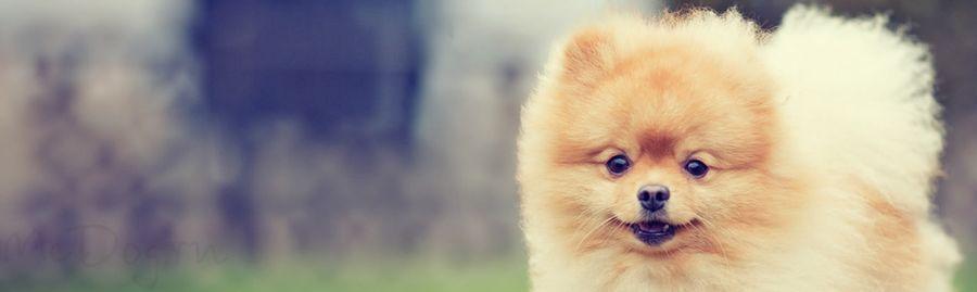 Одежда для китайской хохлатой 🐾 и других маленьких собак Header
