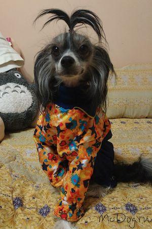 Одежда McDog для маленьких собак