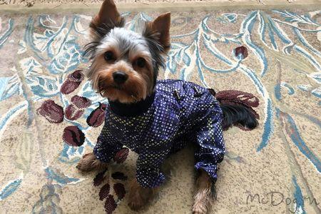 Йоркширский терьер в зимней одежде McDog
