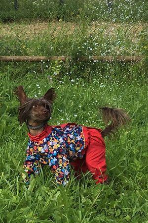 Одежда для китайских хохлатых собак в Санкт-Петербурге - McDog.ru