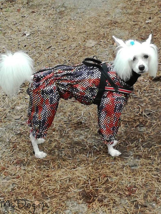 Одежда для китайской хохлатой собаки интернет магазин