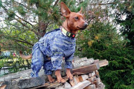 Удобная одежда McDog для пинчеров