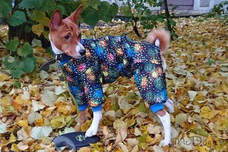 Одежда для собак басенджи в Санкт-Петербурге - McDog.ru