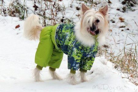 Одежда для китайских хохлатых собак в Санкт-Петербурге