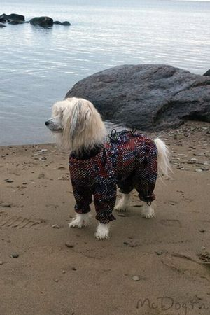 Одежда для китайских хохлатых собак в СПб - McDog.ru