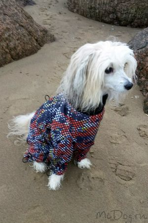 Одежда для китайских хохлатых собак. Интернет-магазин - McDog.ru
