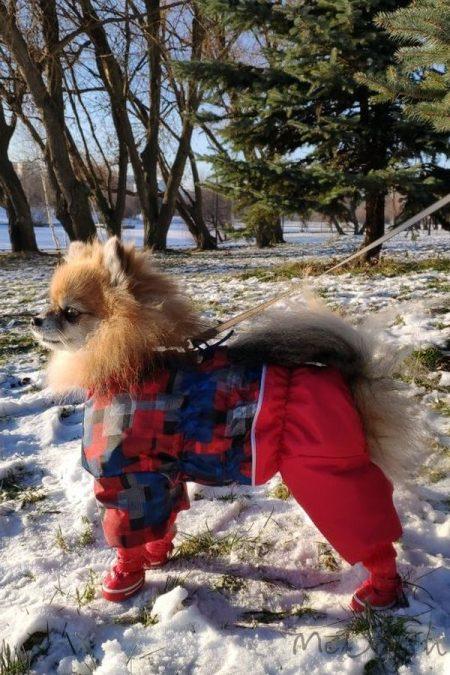 """Комбинезон для собак """"Красная клетка с красным"""". Осень-весна."""