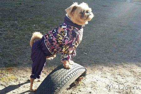 Одежда для маленьких собак - McDog.ru
