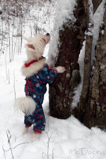 Одежда для китайских хохлатых собак в интернет-магазине mcdog.ru