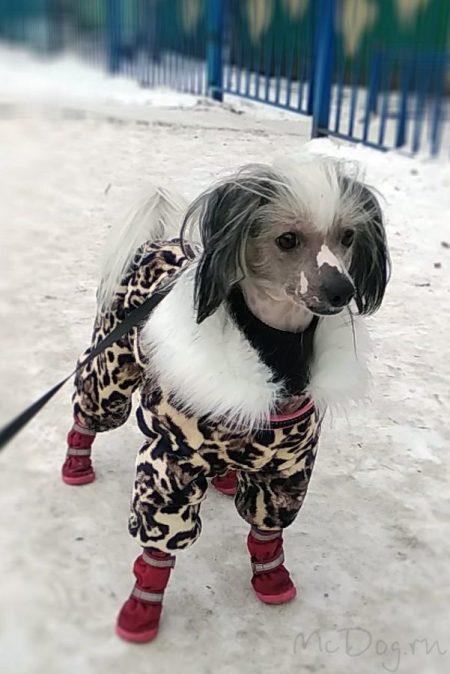 """Зимний флисовый комбинезон McDog """"Леопард"""" с меховым воротником"""
