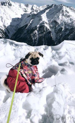 """Зимний комбинезон для собак McDog """"Печворк с брусникой"""""""
