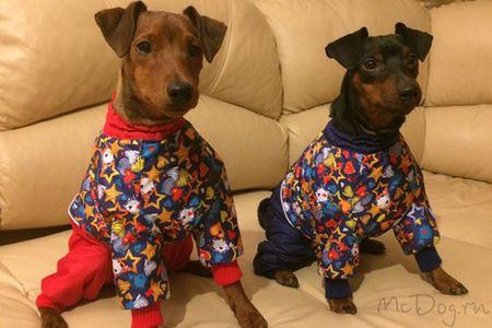 Собаки Пинчеры в комбинезоне McDog
