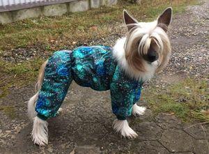 Отзывы об одежде для собак McDog.ru