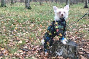 """Китайская хохлатая собака в мембранном дождевике """"Ночной салют"""" на подкладе из флиса"""
