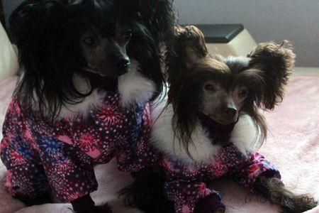 Одежда для собак в СПб - McDog.ru