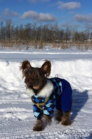 Одежда для собак в Санкт-Петербурге - McDog.ru