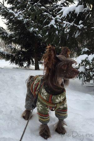 Одежда для собак в Санкт-Петербурге
