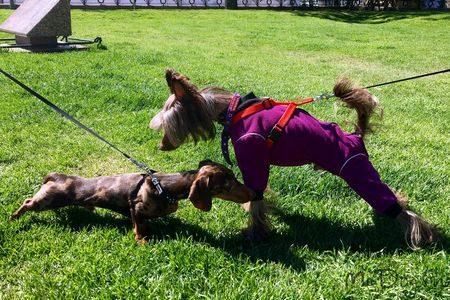 Флисовые комбинезоны для собак в Санкт-Петербурге - McDog.ru