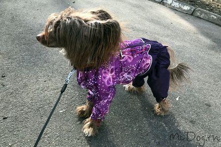 комбинезоны для собак в Санкт-Петербурге - McDog.ru