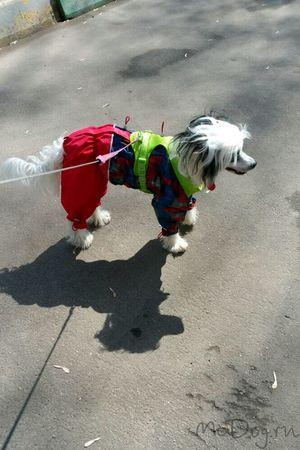 Интернет-Магазин - Одежда для собак - McDog.ru
