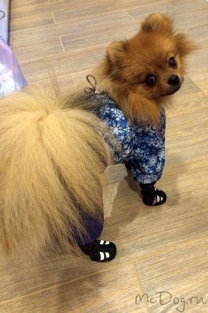 Купить одежду для собак - McDog.ru