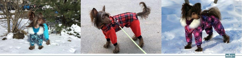 Комбинезоны и дождевики для Китайских Хохлатых Собак (КХС)