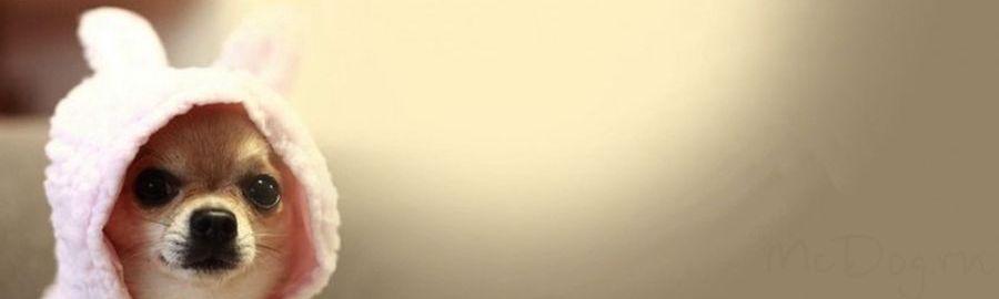 Комбинезоны и дождевики для Чихуа