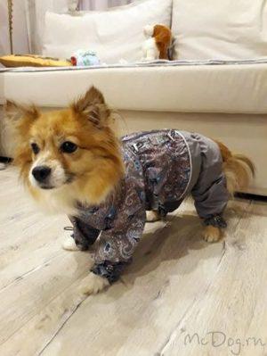 """Комбинезон для собак """"Серые огурцы"""". Осень-весна."""