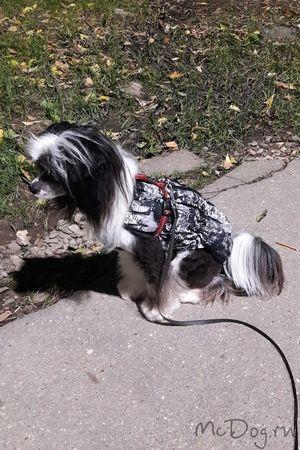 Купить Одежду для собак в Санкт-Петербурге