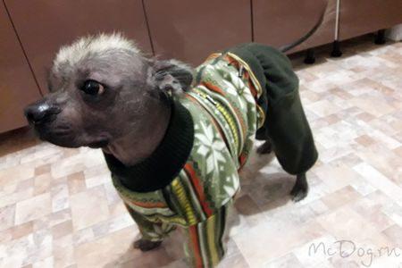 Одежда для собак Интернет-магазин