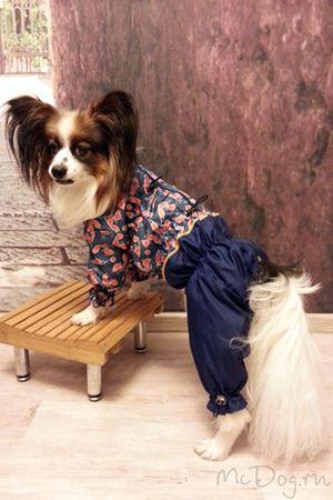 Одежда для Папиньона на McDog.ru