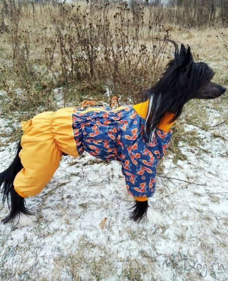 """Китайская хохлатая собака в комбинезоне """"Лиса апельсин"""" (подклад - синтепон)"""