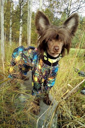 Одежда для Китайской Хохлатой на McDog.ru