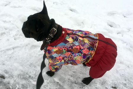 Одежда для французского бульдога в интернет-магазине mcdog.ru