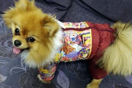 Одежда для шпица в интернет-магазине mcdog.ru