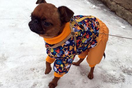 Одежда для грифона в интернет-магазине mcdog.ru