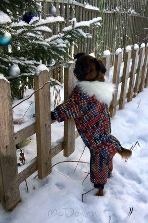 Одежда для грифонов в интернет-магазине mcdog.ru