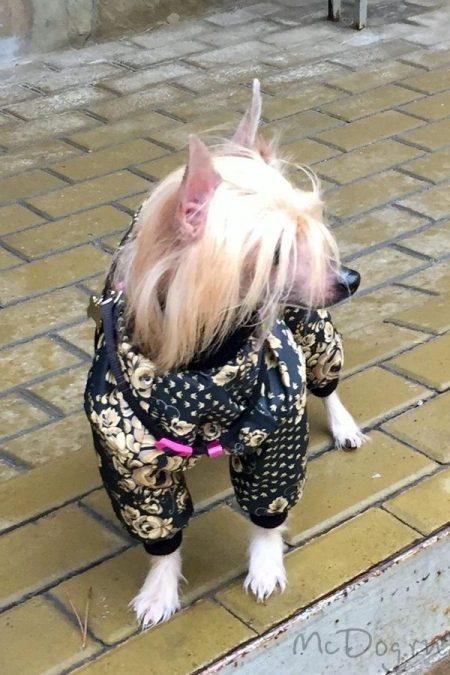"""Китайская хохлатая собака в комбинезоне """"Золотая роспись"""" (подклад зимний флис)"""
