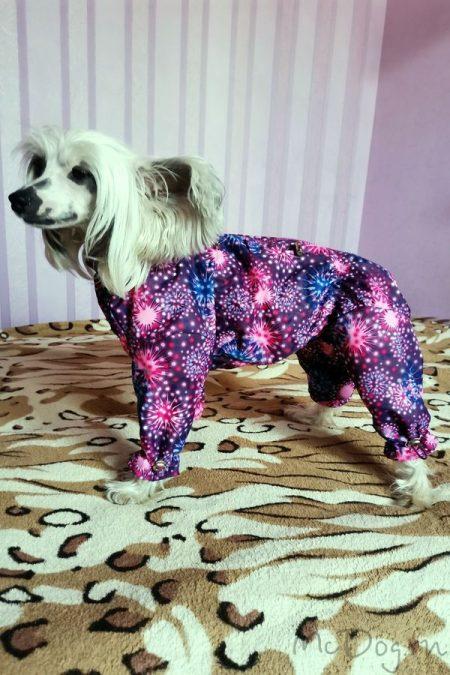 """Китайская хохлатая собака в мембранном комбинезоне """"Розовый салют"""" 💜"""