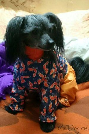 Одежда для Китайской Хохлатой собаки в интернет-магазине mcdog.ru