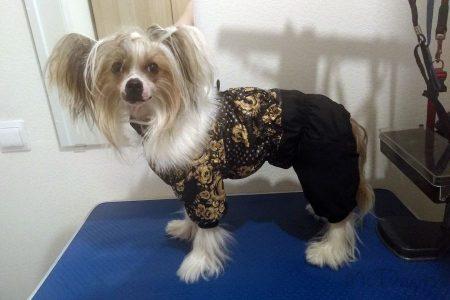 """Зимний комбинезон для собак """"Золотая роспись с черным"""" на кнопке"""