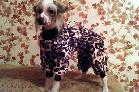 Одежда для Китайский Хохлатых на McDog.ru