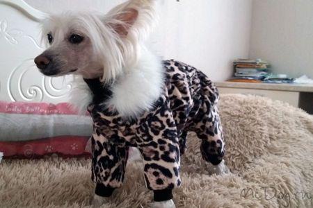 Одежда для собак на mcdog.ru