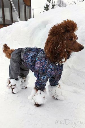 Одежда для пуделей на mcdog.ru