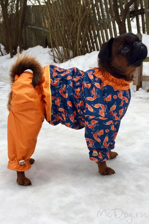 Одежда для Брабансонов в интернет-магазине McDog.ru