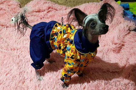 Одежда для Китайских Хохлатых в интернет магазине McDog.ru