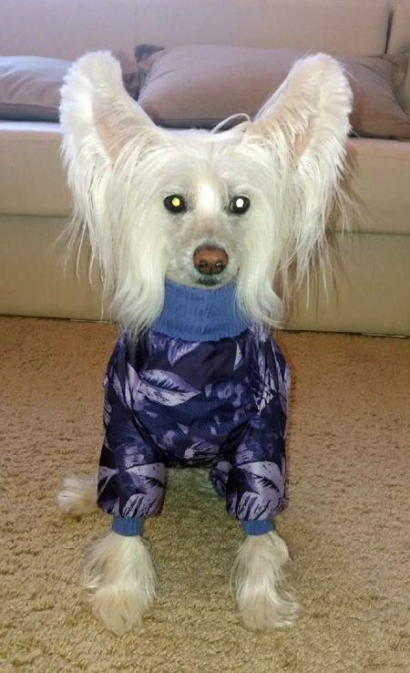 """Зимний комбинезон для собак McDog """"Фиолетовые листья"""""""