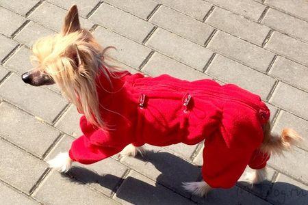 Китайская хохлатая собака в комбинезоне из флиса