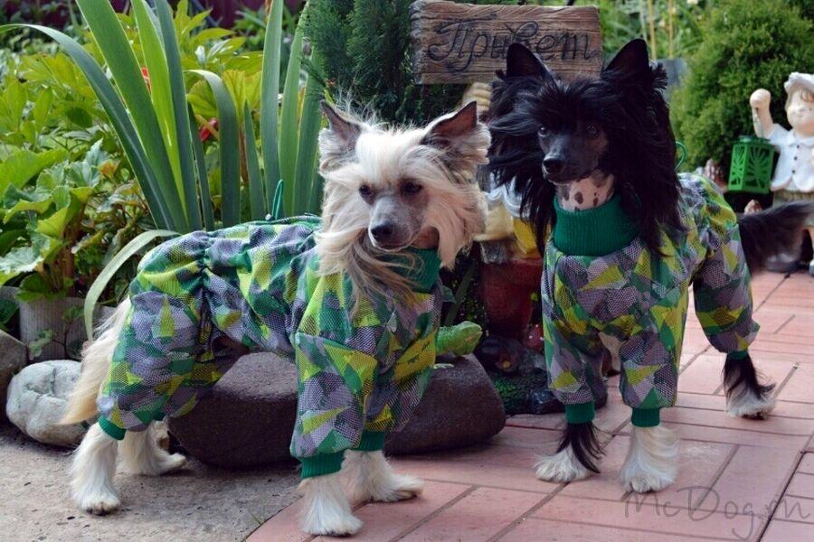 """Китайские хохлатые собаки в комбинезонах """"Зелёные стрелки"""" из мембраны на флисе"""